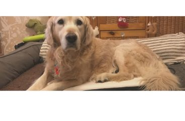 PEMF therapy for dogs by Veterinary Nurse & Canine Myotherapist Kirsty