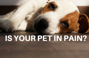 Is your pet in pain? Manage animal pain with PEMF therapy