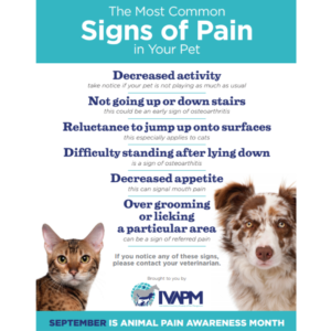 Signs of pain in animals